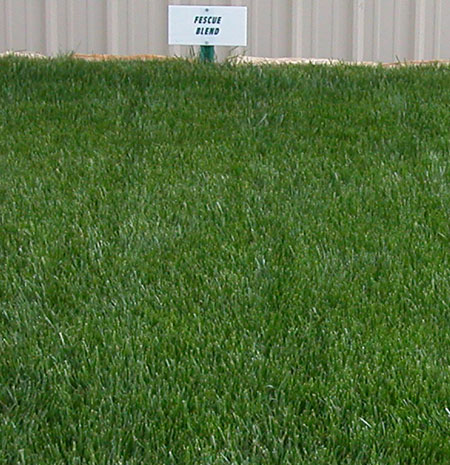 Fine Fescue Blend Grass Seed